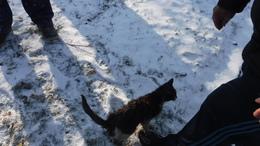 Csatornába esett macskát mentettek a tűzoltók