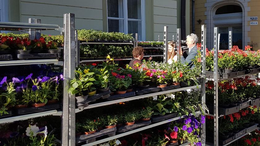 Ismét kedvezményes virágvásár van Kaposváron