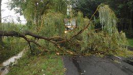 Fákat döntött a tegnapi vihar