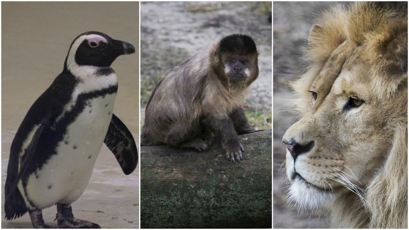 ... ezek pedig állatkerti felvételeink.