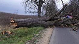 Fákat döntött ki az erős szél Somogyban