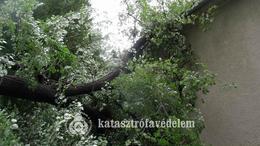 A somogyi fákat is megtépázta a vihar