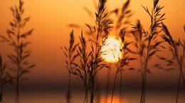 Egyre melegebb, szinte késő nyárias idő várható a hétvégén