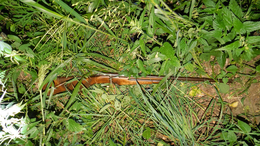 Vádat emelnek a somogyszentpáli orvvadász ellen