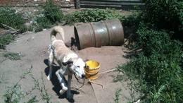 Állatkínzás: beköpték a legyek az éhező kutya fülét