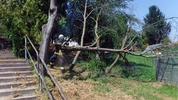 Letört a faág, pont egy tábor közelében