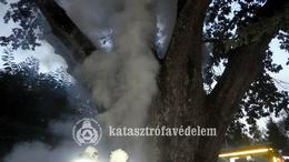 Felgyújtottak egy 300 éves védett fát Barcson