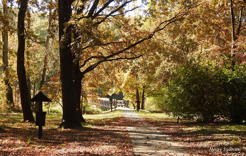 Deseda Arborétum
