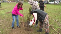 Több mint 30 fát ültettek el Kaposváron