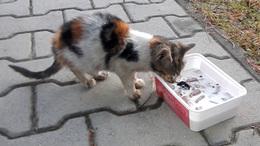 Autóst és cicát is mentettek a hétvégén a somogyi tűzoltók