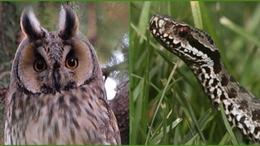 Íme az év madara és az év hüllője
