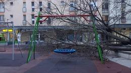 Játszótérre dőlt egy fa a Honvéd tömbbelsőben