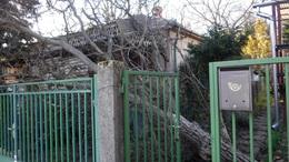Fákat döntött ki, épületek tetejét bontotta meg a viharos szél