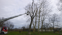 Megdőltek a fák az iskolaudvaron