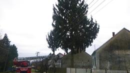 Nagyméretű fák dőltek meg