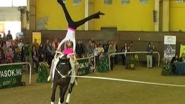 Kaposvár rendezheti a lovastorna-világbajnokságot!