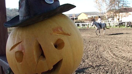 Halloween kupa a Meistro Lovasklubban