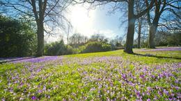 További erős felmelegedés várható, beköszönt az igazi tavasz