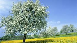 Visszatér a kellemes tavaszi idő