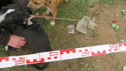 Állatkínzókat kaptak el a zsaruk