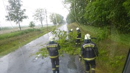Kidőlt fa adott munkát a tűzoltóknak