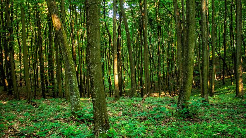 Zselici erdő; fotó: SEFAG Zrt.