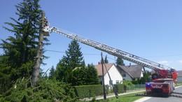 Fákat vágtak ki a tűzoltók