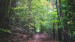 Egyre többen mennek kikapcsolódni az erdőbe
