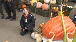 155 kilós tököt termesztett egy sántosi gazda