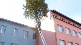 Veszélyes fák Somogyban