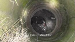 Kacsákat mentettek a tűzoltók