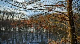 Fotókon a téli Deseda