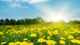 Igazi tavaszi idő várható február utolsó hetében