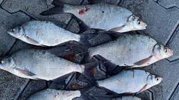 Három orvhalásszal szemben is vádat emelt az ügyészség