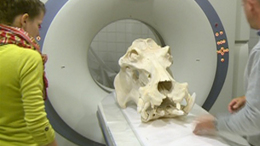 Víziló koponya és fogkrém-effektus a kutatók éjszakáján