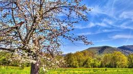 Szerdán már igazi tavaszi idő várható