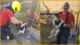 Kerítésbe szorult kutyát mentettek a lánglovagok