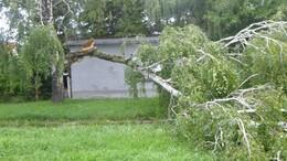 Kidőlt fák és leszakadt ágak jelezték a vihar útvonalát
