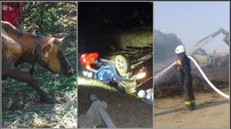 Tehenet is mentettek a hétvégén a somogyi tűzoltók