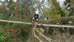 Gázvezetékre dőlt egy fa